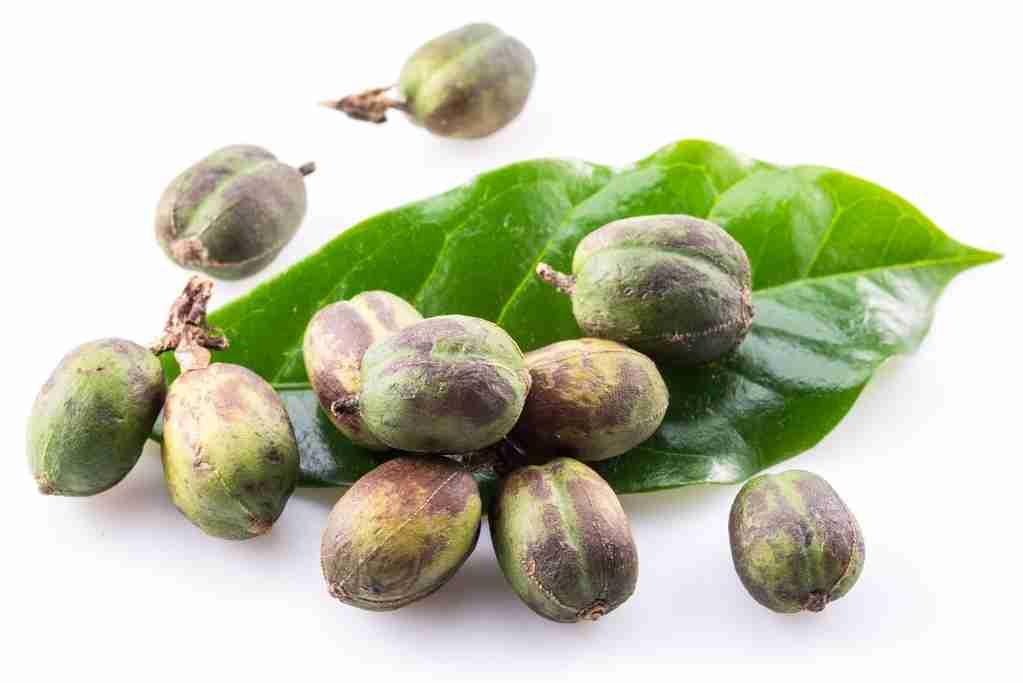 green coffee bean extract in shredfierce fat burner