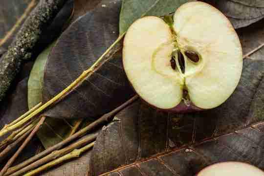 walnut-leaves