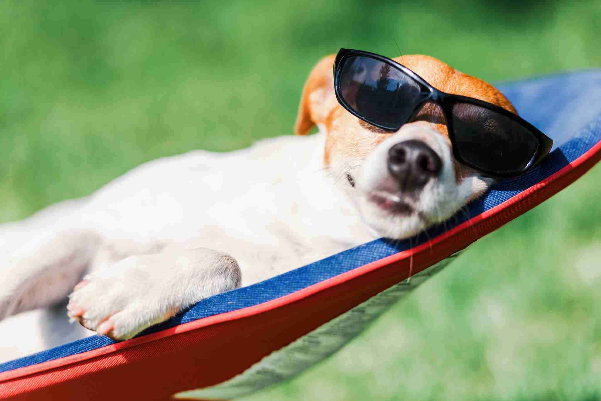 Five Tips for Summer Safety