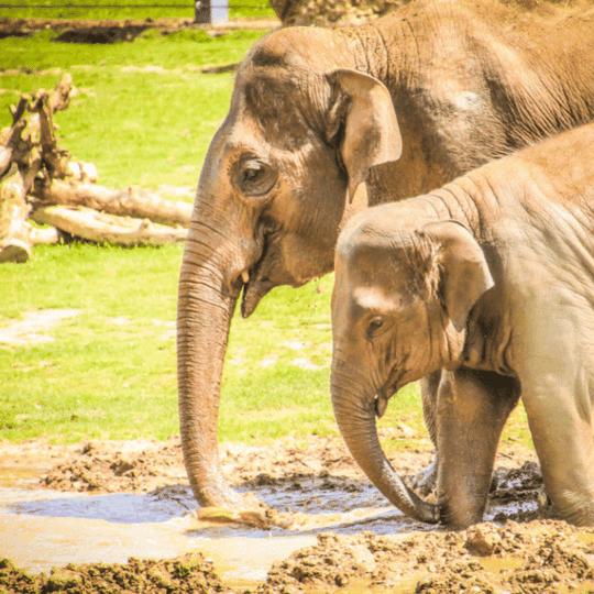 zoo probiotics Teraganix odor control gut health chemical-free cleaning