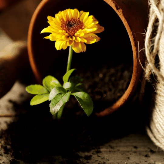 soil health for flower growth teraganix beneficial microbes