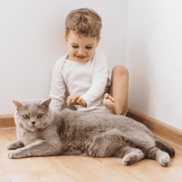 Introduce cat and baby - blog image