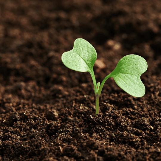 seedling teraganix EM-1 soil health