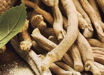 Ashwagandha root - a revered rasayana long-life herb of Ayurvedic medicine - in Golden Goddess Elixirs