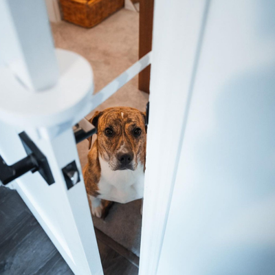 The Door Buddy - Blog - Keep Dog Out of Litterbox