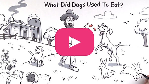 THE HISTORY OF DOG FOOD