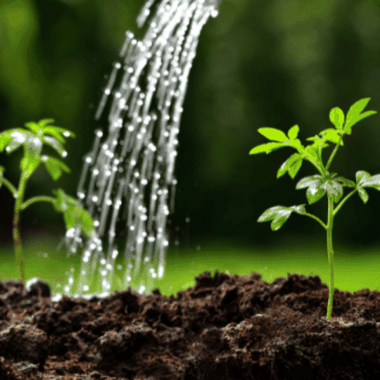 Foliar sprays soil health chemical-free inputs organic gardening teraganix