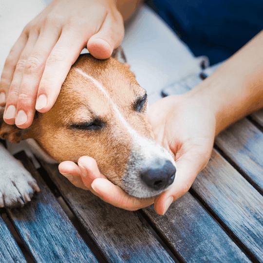 Pet Safety Tips - blog image
