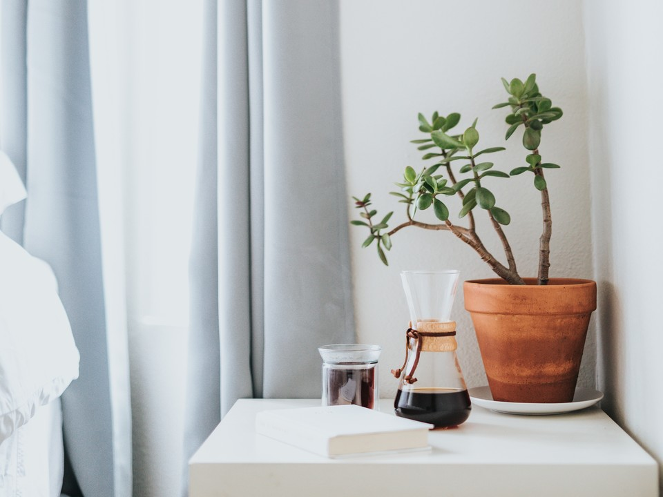 8 Indoor Plants To Help Purify and De-Stress Your Home
