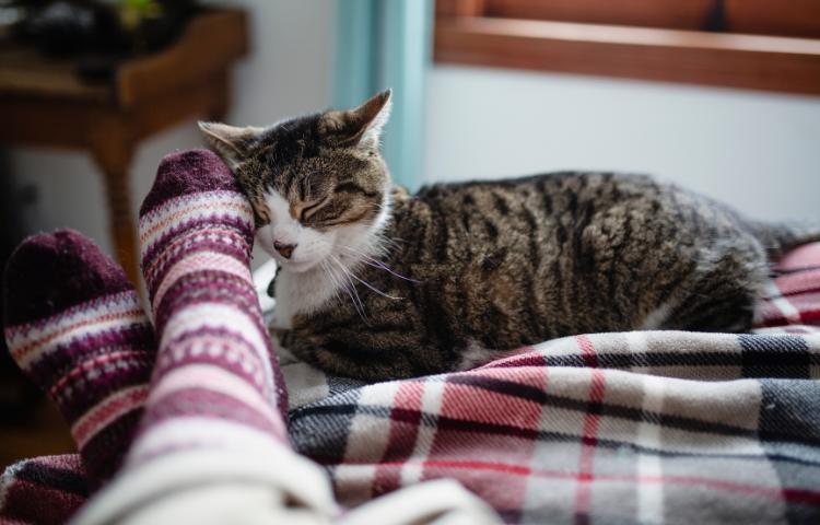 Door Buddy - How Cats Show Affection