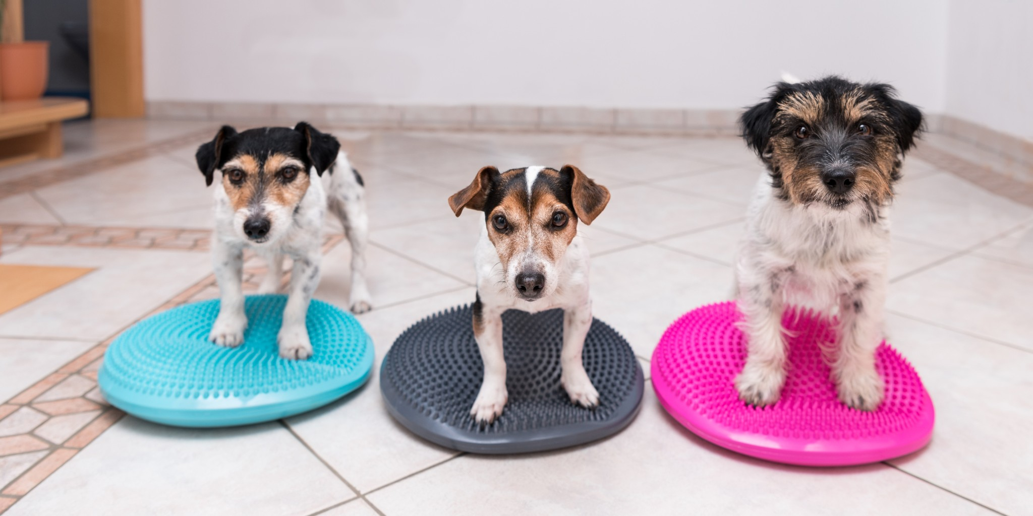 5 Reasons Your Dog Needs to Get in Shape Now