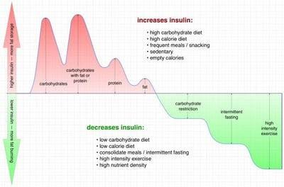 Graph Increases Insulin Decreases Insulin
