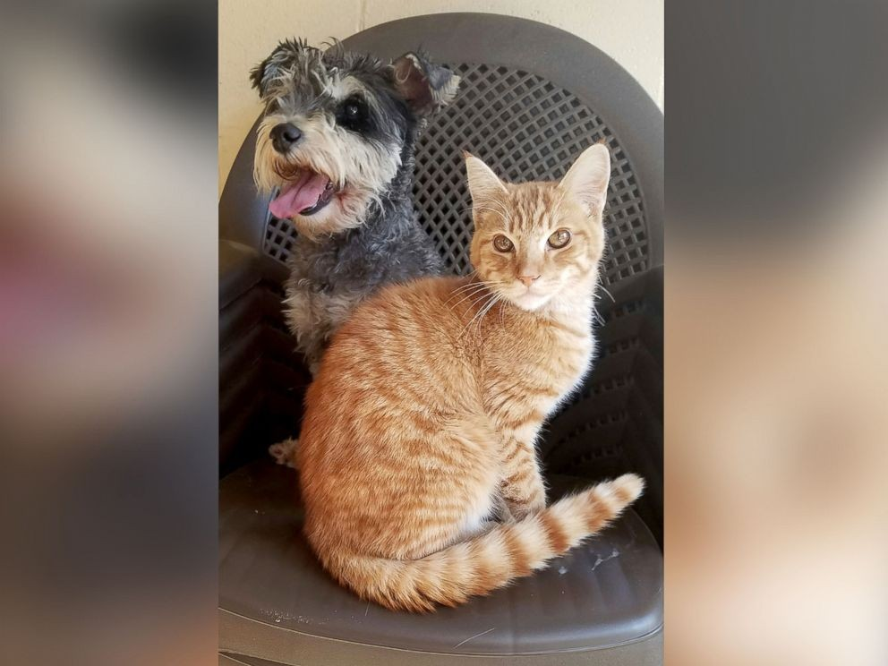 Meet Romeo and Juliet, both residents at theChula Vista Animal Care Facility in California.