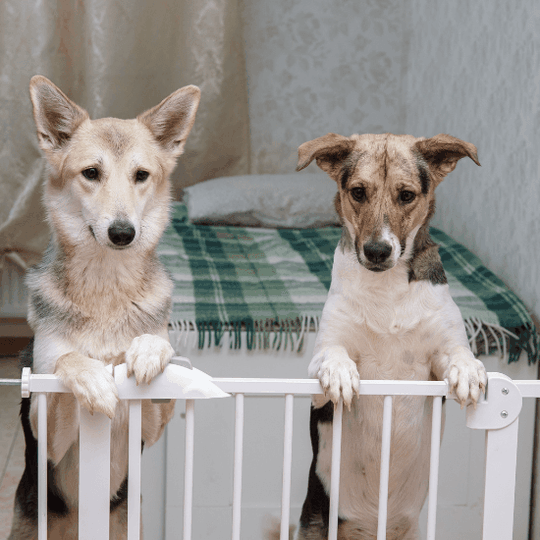 how to keep dog out of litter box - article image