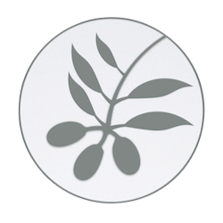 Olive Leaf Illustration