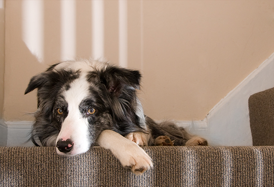 dog standing at bottom of stairs