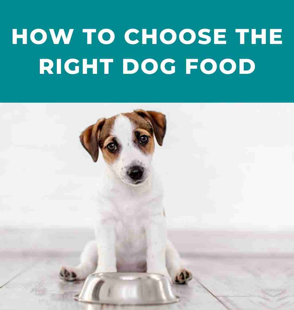 What's the right dog for your lifestyle?