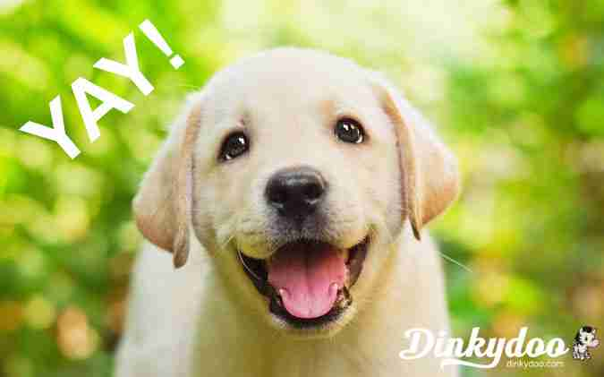 free shipping puppy dinkydoo