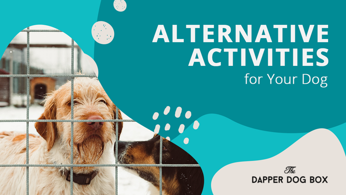 alternative activities for dogs