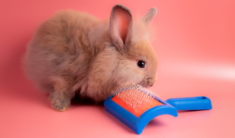 brushing your rabbit
