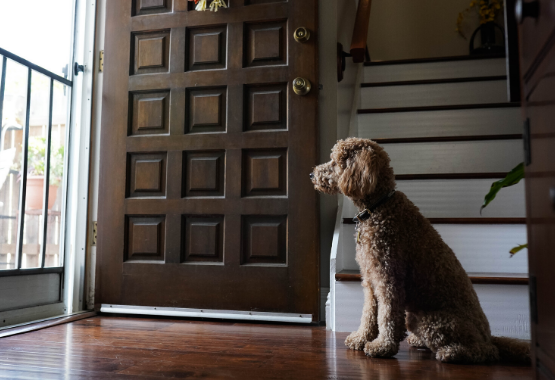 DOG WAITING FOR OWNER TO COME HOME