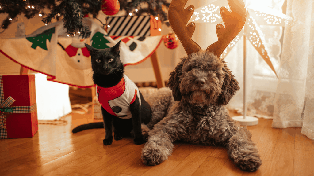 Cover image - Christmas gifts ideas for pet owner