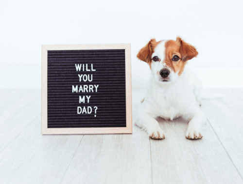 SIGN READING WILL YOU MARRY MY DAD NEXT TO DOG
